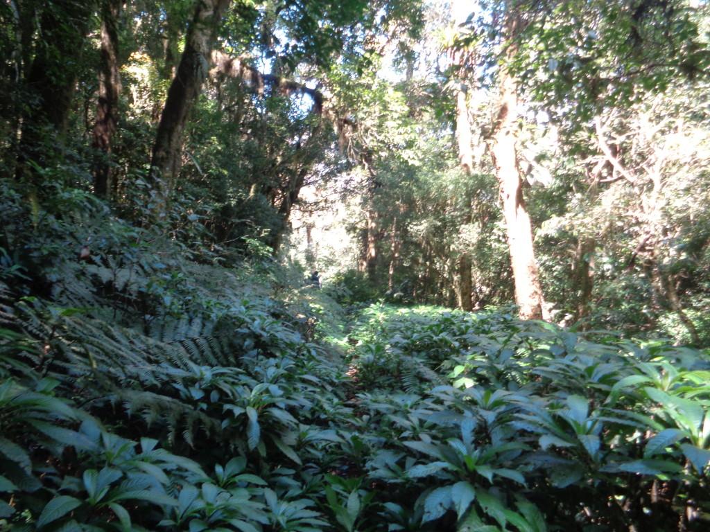 Quando a trilha do Cristovão mudar para essa vegetação a trilha vai estar alguns metros a direita.